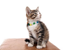 Small pet Royalty Free Stock Image