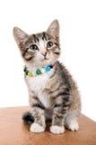 Small pet Royalty Free Stock Photos