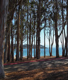 Small picturesque grove on Pacific coast Royalty Free Stock Images