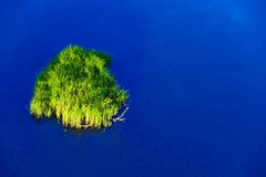 Small picturesque island with a grass Royalty Free Stock Image