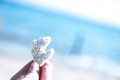 Small pieces of coral reef on the beach Royalty Free Stock Photography