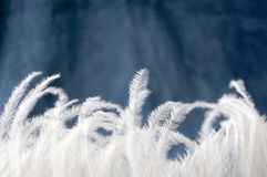 Small pieces of feather Royalty Free Stock Images