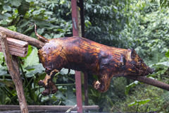 A small pig being barbecued on charcoals Stock Photos