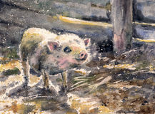 Small pig. Watercolors painted illustration of cute small pig in farm Stock Photos