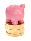 Small piggy bank on top of golden coins. Money and business conc Royalty Free Stock Photo
