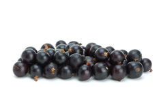 Small pile of blackcurrant berries Stock Image