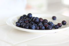 Small pile of Blueberries Stock Photography