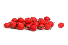Small pile of haw berries Royalty Free Stock Photo