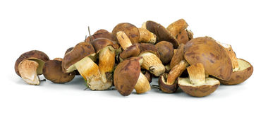 Small pile of yellow boletus mushrooms near. Royalty Free Stock Photos