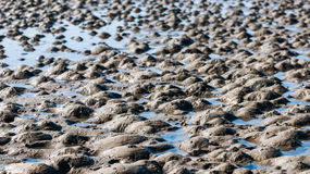 Small muddy heaps on the beach Royalty Free Stock Images