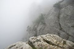 Pine on cliff in dense fog. Small pine on cliff in dense fog Royalty Free Stock Image