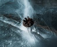 A small pine cone rests comfortably on a crack of ice on a frozen lake. In the Sierra Nevada Stock Photos