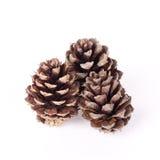 Small pine cones Stock Image
