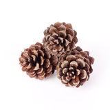 Small pine cones Stock Images