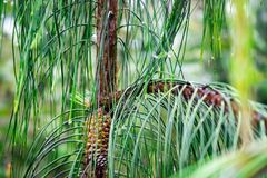 Small pine in the field, growing in the nature royalty free stock images