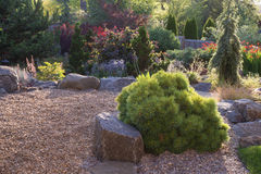 Small Pine and Stone Garden. A Horsford dwarf white pine is the centerpiece of this backyard perennial garden with pebbles Royalty Free Stock Photos