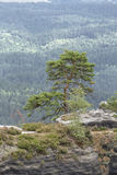 Small pine on top of a cliff Stock Images