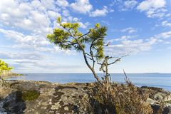 A small pine tree against the sky. Rocky shore of Lake Ladoga. Karelia, Russia. Sunny day in June Royalty Free Stock Photography