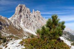 Small pine tree and Cima Ambrizola and Clroda da Lago. Small pine tree and stone and Cima Ambrizola and Clroda da Lago, Italien dolomites Stock Image