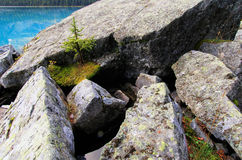 Small pine tree growing on rocks, Lake O'Hara, Yoho National Par Stock Photos