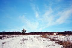 Small pine tree on hill covered with snow, on a background of blue cloudy sky stock images