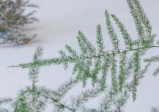 Small pine tree stock photography