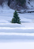 A small pine tree in the snow. A small pine tree sits in the snow by the covered docks Stock Photos