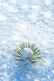 Small pine tree in the snow. Stock Images
