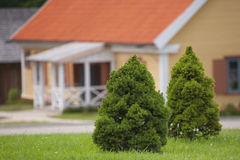 Small pine trees on the background of a traditional village hous Stock Photos