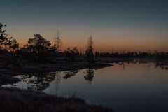 Small pine trees reflecting in pond of a marsh. Kemeri national park. At dawn, Latvia. Some grain present Stock Image