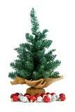 Small pine Stock Image