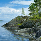 Small pines on the stone shore of Ladoga lake Stock Photos