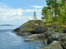 Small pines on the stone shore of Ladoga lake Royalty Free Stock Images