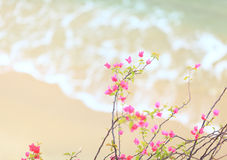 Small pink azalea Stock Photos