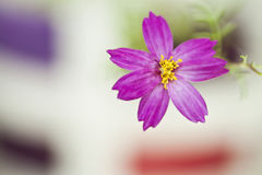Small pink flower Royalty Free Stock Photo