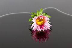 Small pink flower lay in water Stock Photography