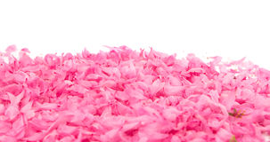 Small pink flower petals Stock Photos
