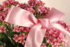 Small pink flowers with bow Royalty Free Stock Photography