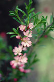 Small pink flowers on the branch. Stock Photo