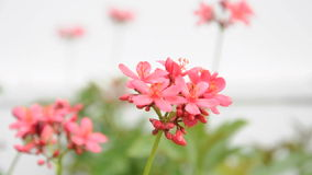 Small pink flowers in the garden Stock Photos