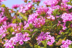 Small pink flowers I Stock Images