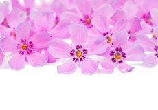 Small pink flowers Stock Photos