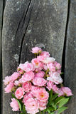 Small pink garden roses on wooden surface Royalty Free Stock Photography