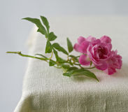 Small pink roses. On rustic fabric Stock Images