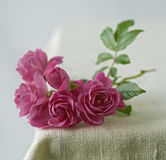 Small pink roses. On rustic fabric Stock Photos