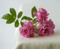 Small pink roses. On rustic fabric Stock Photography