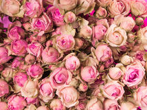 Small pink roses bouquet close up Royalty Free Stock Images