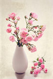 Small pink roses in a vase, texture background Royalty Free Stock Image