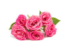 Small pink roses Royalty Free Stock Photography