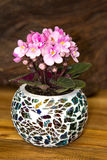 A small, pink Viola plant in a colorfull glas pot. A small, pink Viola plant in a colorfull glas pot on wooden background , a beautiful table decoration Stock Images